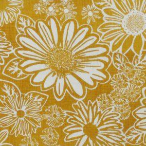 Namaqua Daisy: mustard on white