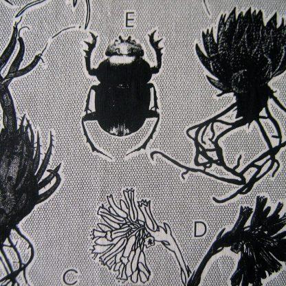 Liliacea: black on natural