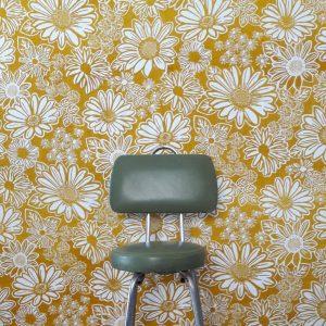 Namaqua Daisy wallpaper